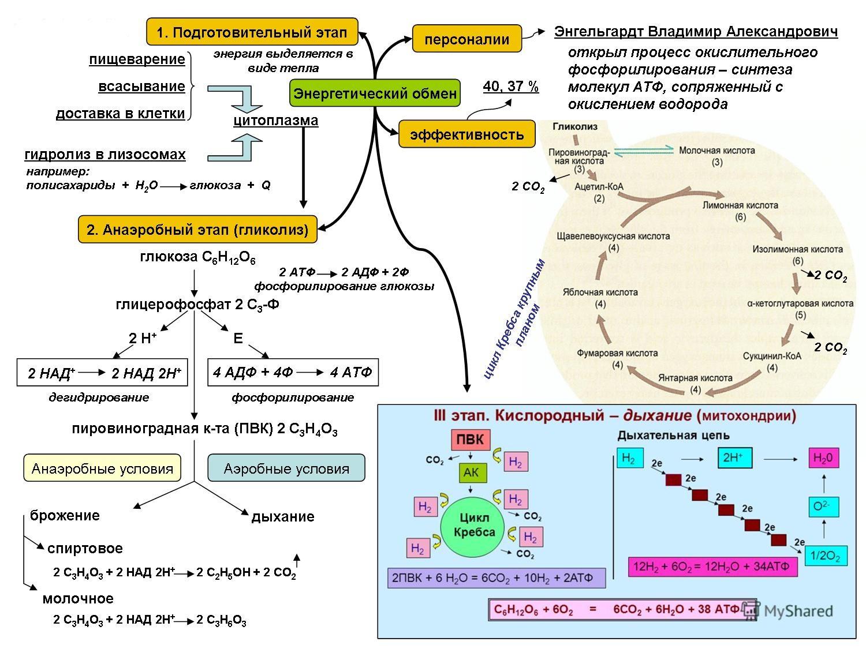 Метаболизм схема