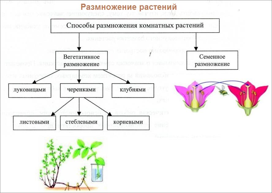 Много смешных, картинки способы размножения растений